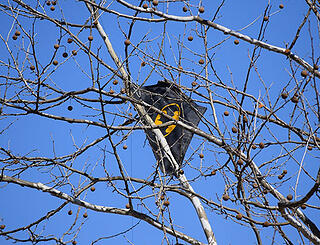 kite-in-tree-2152666_1920.jpg